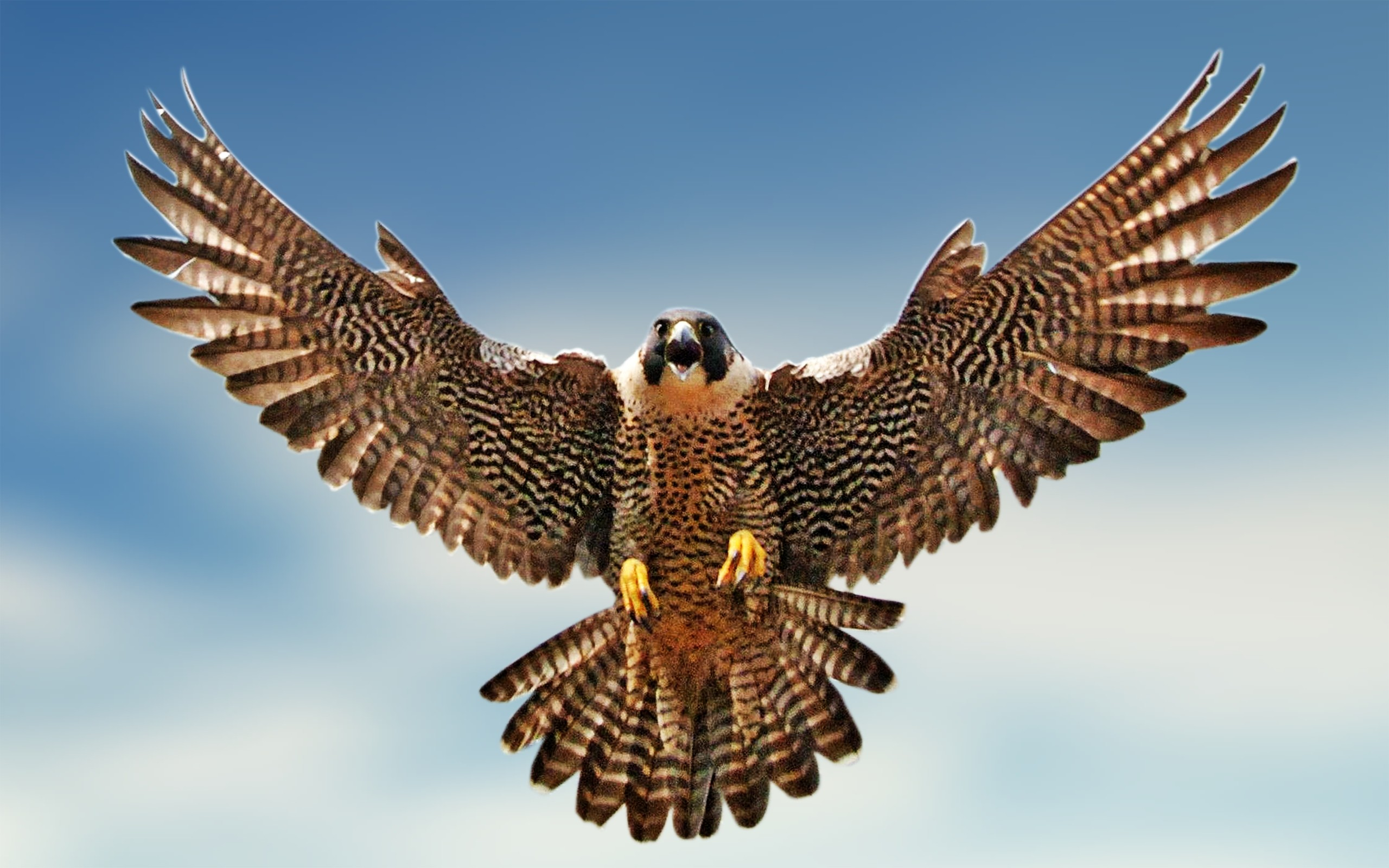 Saudi Prince Takes 80 Falcons on Flight