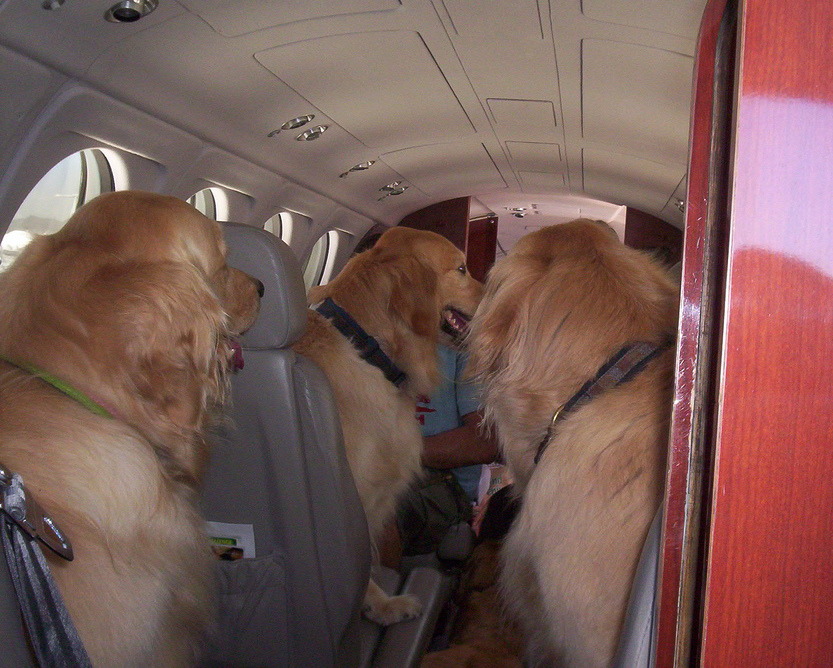 Dogs In Airplane
