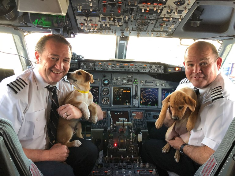Dogs In Aircraft