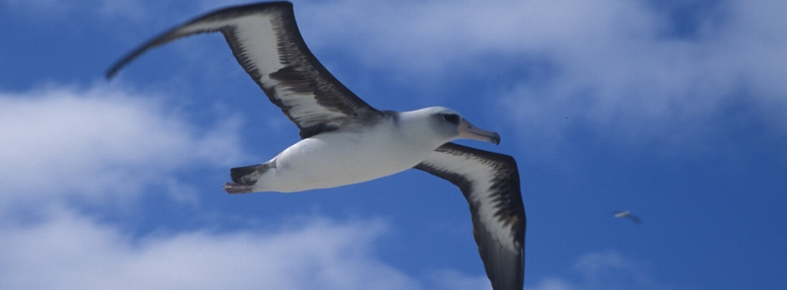 Airbus reveals seabird-inspired AlbatrossOne[Video]