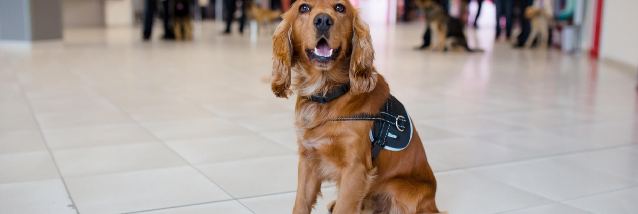 Good-boy: COVID-19 sniffing dogs offer hope for airports