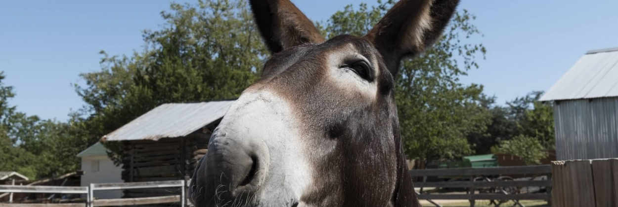 Mule makes an exploratory journey to Ben Gurion Airport [Video]