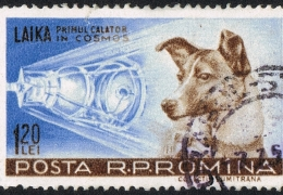 History Hour Horror: Tragic life of Laika, the first dog in space